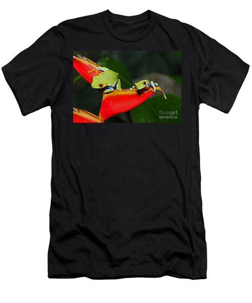 Red Eyed Tree Frogs Men's T-Shirt (Slim Fit) by Bob Hislop