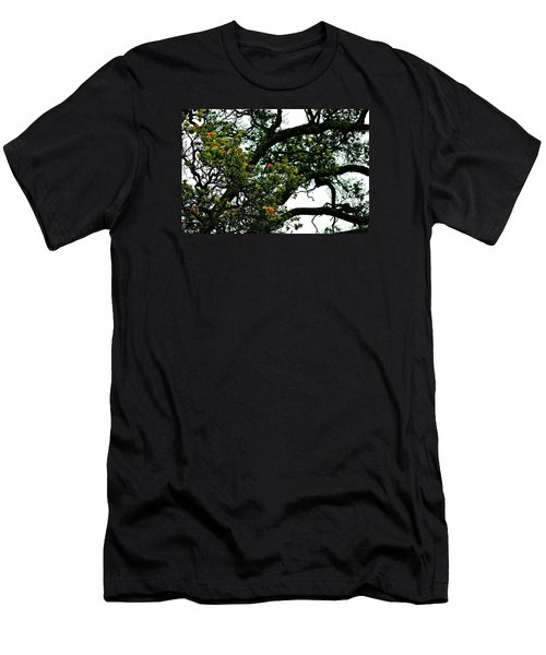 Red Ohia Lehua Tree Men's T-Shirt (Athletic Fit)