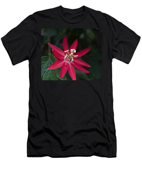 Red Passion Flower Men's T-Shirt (Athletic Fit)