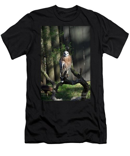 Red Shouldered-hawk Men's T-Shirt (Athletic Fit)
