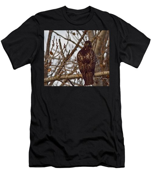 Red Tail Hawk Men's T-Shirt (Slim Fit) by Brian Williamson