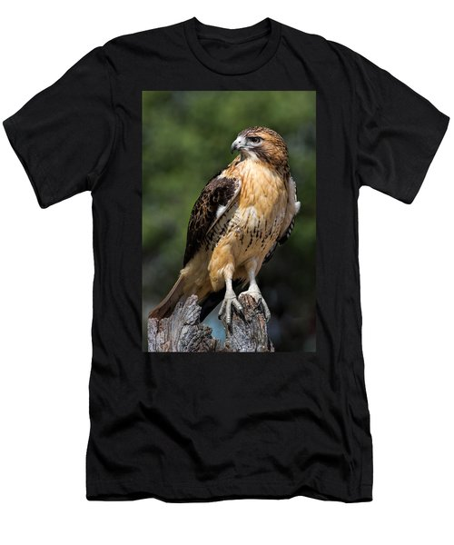 Red Tail Hawk Portrait Men's T-Shirt (Athletic Fit)
