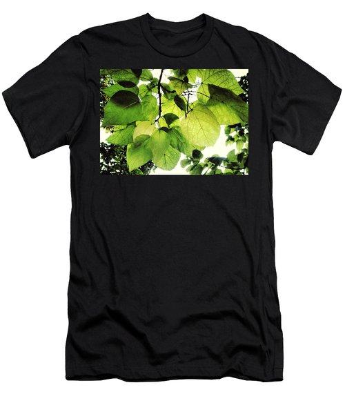 Catalpa Branch Men's T-Shirt (Athletic Fit)