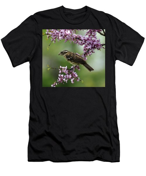 Redbud With Grosbeak Men's T-Shirt (Athletic Fit)