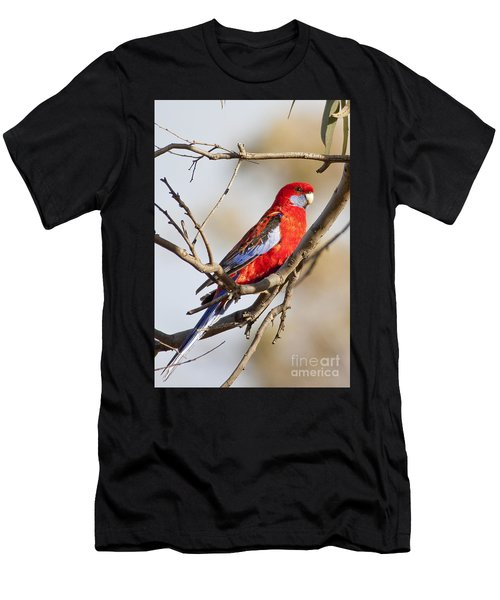 Crimson Rosella 1 - Australia Men's T-Shirt (Athletic Fit)
