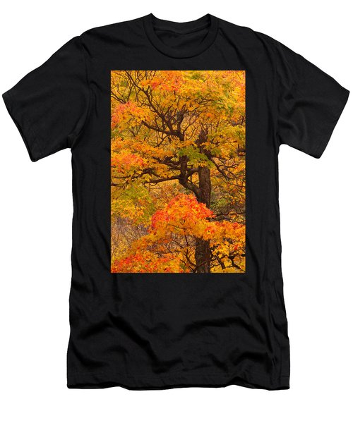 Shapely Maple Tree Men's T-Shirt (Athletic Fit)