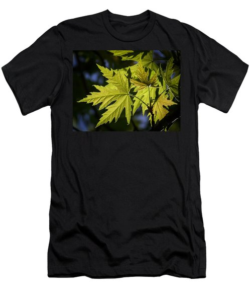 Silver Maple Men's T-Shirt (Athletic Fit)