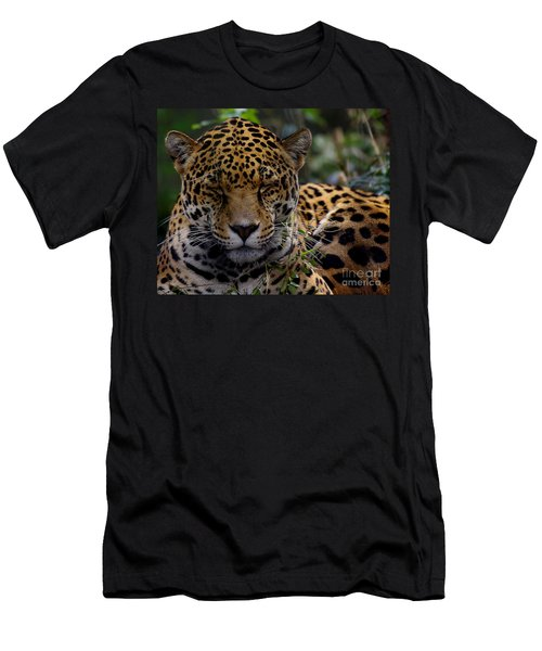 Sleeping Jaguar Men's T-Shirt (Athletic Fit)