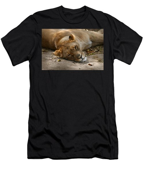 Sleepy Lioness Men's T-Shirt (Athletic Fit)