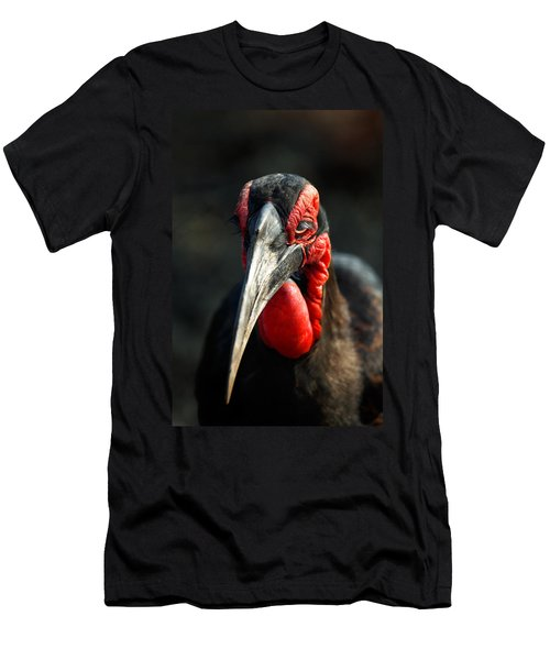 Southern Ground Hornbill Portrait Front View Men's T-Shirt (Athletic Fit)