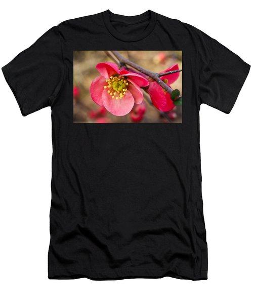 Springtime Quince Men's T-Shirt (Athletic Fit)