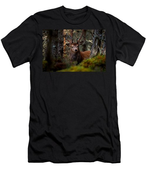 Stag In The Woods Men's T-Shirt (Athletic Fit)