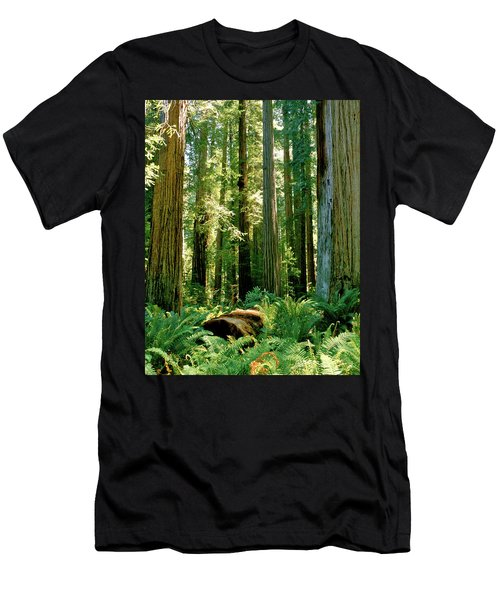 Stout Grove Coastal Redwoods Men's T-Shirt (Athletic Fit)