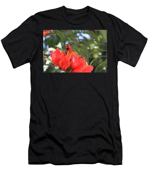 Streak-backed Oriole Men's T-Shirt (Athletic Fit)