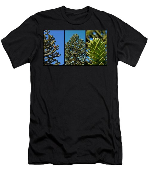 Study Of The Monkey Puzzle Tree Men's T-Shirt (Athletic Fit)