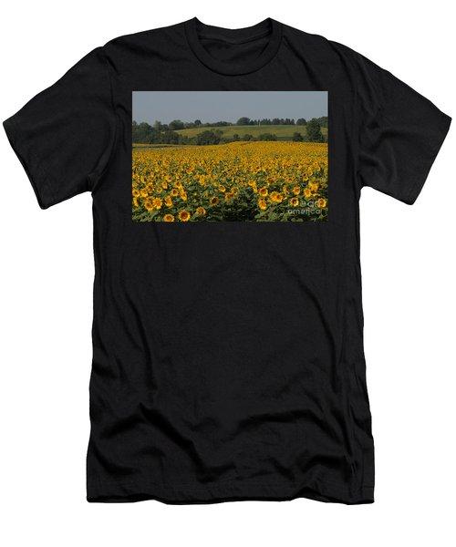 Sun Flower Sea Men's T-Shirt (Athletic Fit)