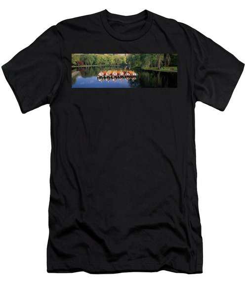 Swan Boats In A Lake, Boston Common Men's T-Shirt (Athletic Fit)