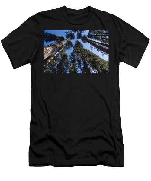 Talls Trees Yosemite National Park Men's T-Shirt (Athletic Fit)
