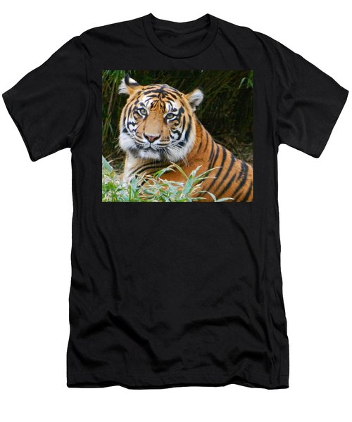 The Eyes Of A Sumatran Tiger Men's T-Shirt (Slim Fit) by Emmy Marie Vickers
