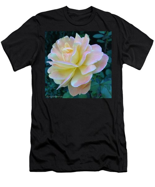 The Rose For A Rose Is A Rose Is A Rose Men's T-Shirt (Athletic Fit)