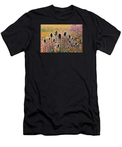 Thistles With Sunset Light Men's T-Shirt (Athletic Fit)