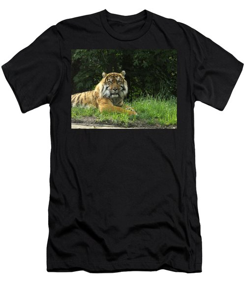 Men's T-Shirt (Slim Fit) featuring the photograph Tiger At Rest by Lingfai Leung
