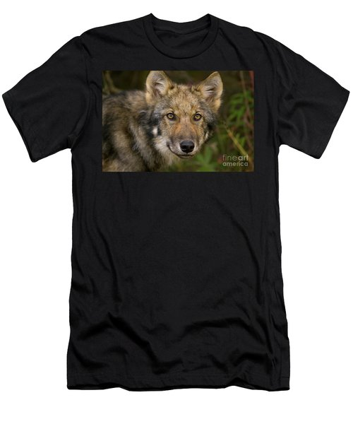 Timber Wolf In Denali Men's T-Shirt (Athletic Fit)
