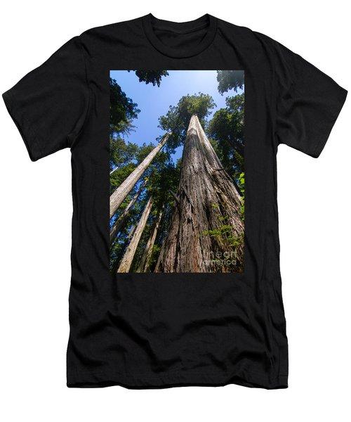 Towering Redwoods Men's T-Shirt (Slim Fit) by Paul Rebmann