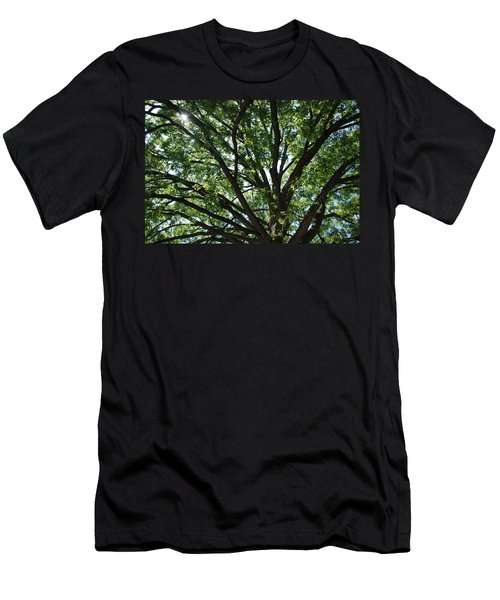 Tree Canopy Sunburst Men's T-Shirt (Athletic Fit)