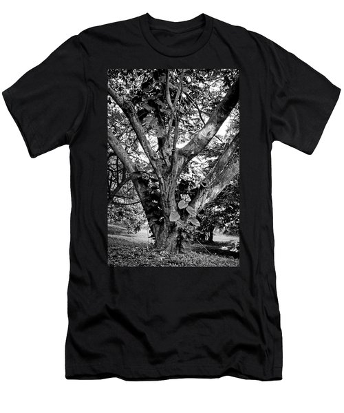 Tree Giant Men's T-Shirt (Athletic Fit)