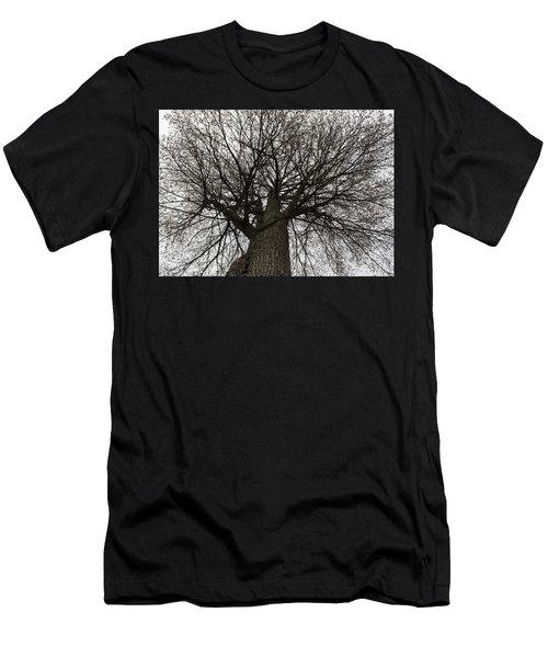 Tree Web Men's T-Shirt (Athletic Fit)