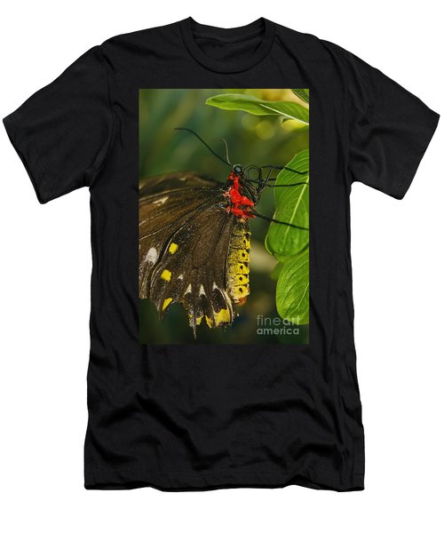 Men's T-Shirt (Slim Fit) featuring the photograph Troides Helena Butterfly  by Olga Hamilton