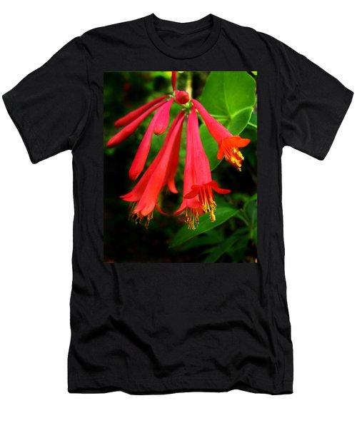 Wild Trumpet Honeysuckle Men's T-Shirt (Athletic Fit)