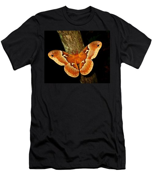 Tuliptree Silkmoth Men's T-Shirt (Athletic Fit)
