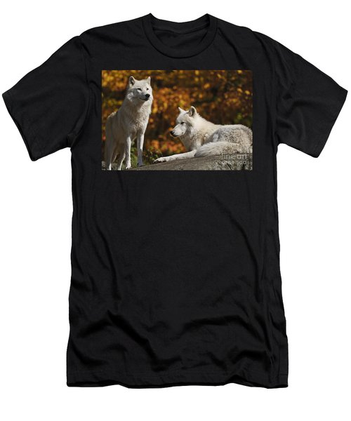 Men's T-Shirt (Slim Fit) featuring the photograph Two Arctic Wolves On Rock Hill by Wolves Only
