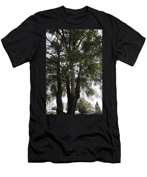 Up-view Of Oak Tree Men's T-Shirt (Athletic Fit)