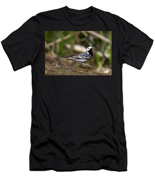 Wagtail's Step Men's T-Shirt (Athletic Fit)