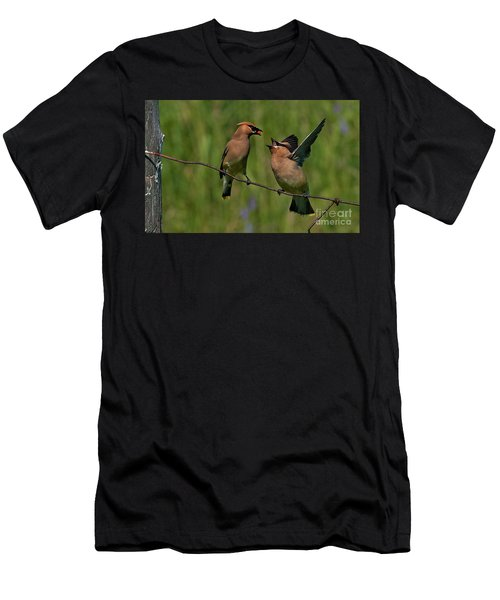 Waxwing Love.. Men's T-Shirt (Athletic Fit)