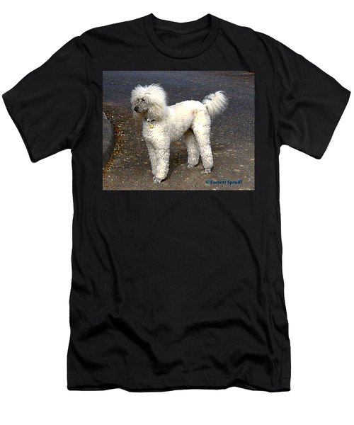 White Poodle Men's T-Shirt (Athletic Fit)