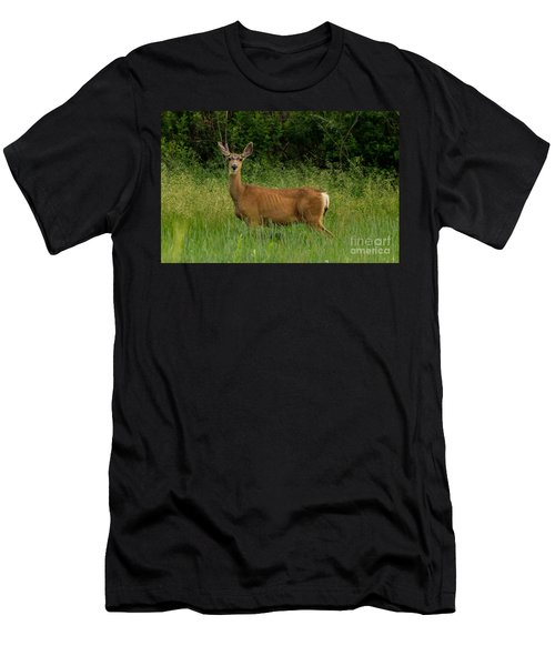 White-tailed Doe Men's T-Shirt (Athletic Fit)