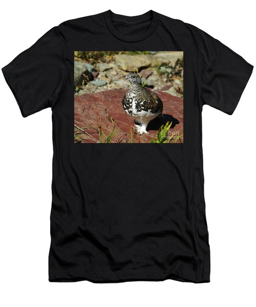 White-tailed Ptarmigan Men's T-Shirt (Athletic Fit)