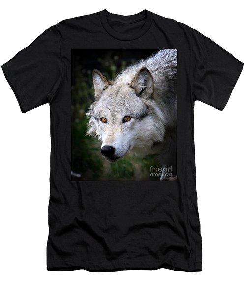 Wolf Stare Men's T-Shirt (Slim Fit) by Steve McKinzie