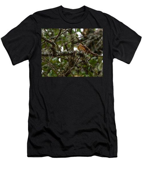 Wren Men's T-Shirt (Athletic Fit)