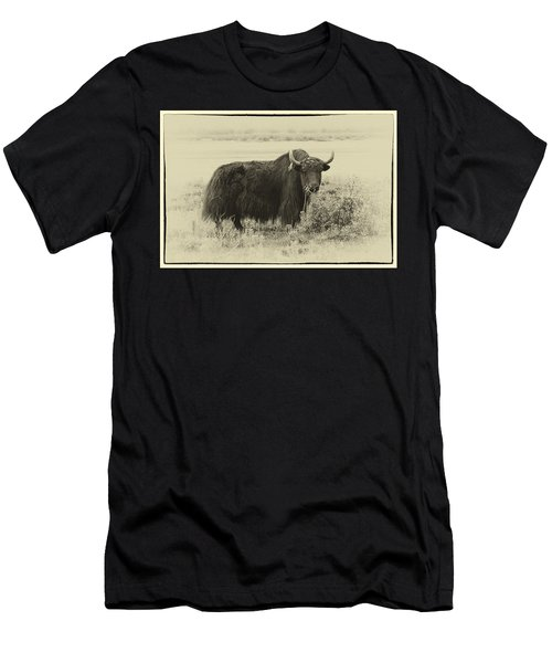 Yaks...the Official Animal Of Tibet Men's T-Shirt (Athletic Fit)