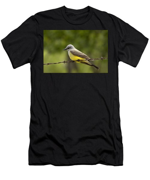 Yellow-bellied Fence-sitter Men's T-Shirt (Athletic Fit)