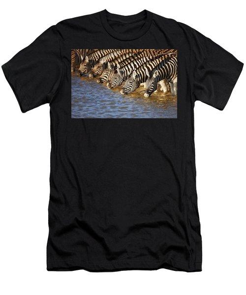 Zebras Drinking Men's T-Shirt (Athletic Fit)