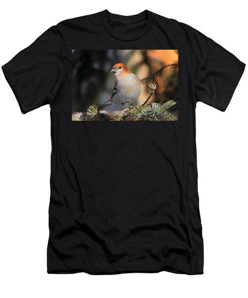 Pine Grosbeak Men's T-Shirt (Athletic Fit)