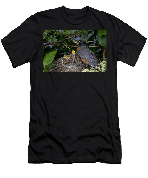 Robin Feeding Its Young Men's T-Shirt (Athletic Fit)