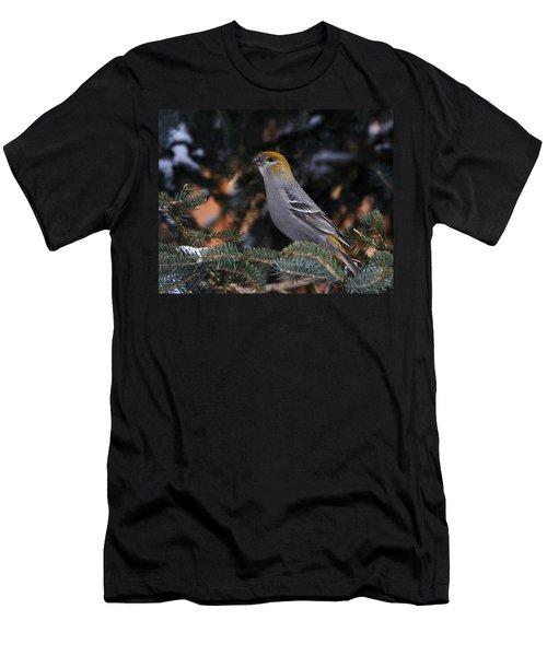 Female Pine Grosbeak Men's T-Shirt (Athletic Fit)