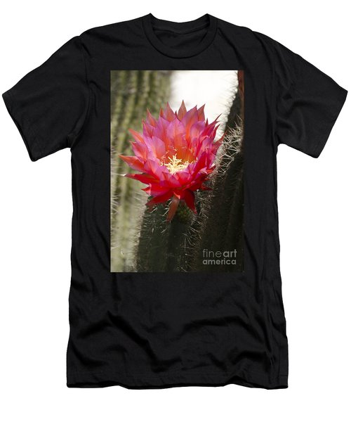 Red Cactus Flower Men's T-Shirt (Athletic Fit)